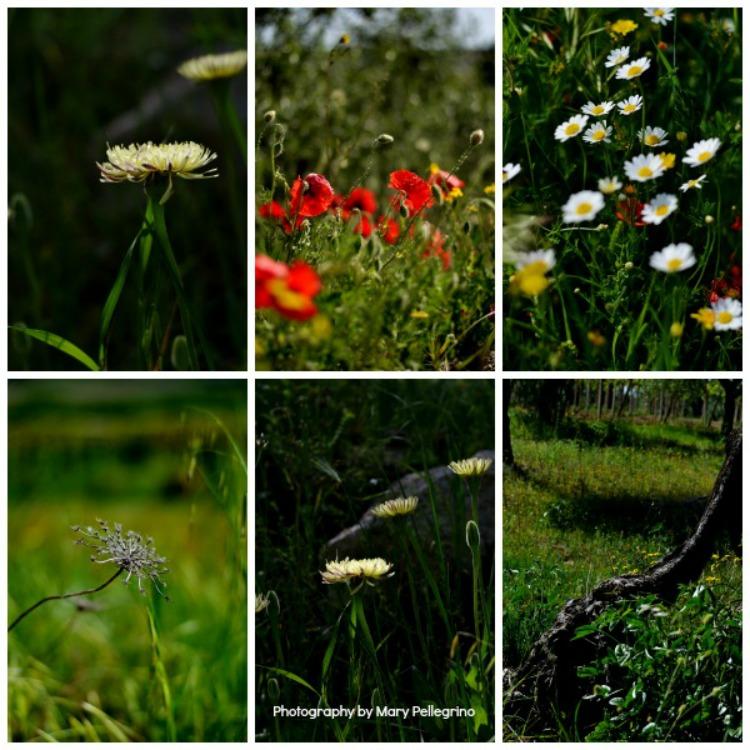 1 Photography by mary pellegrino
