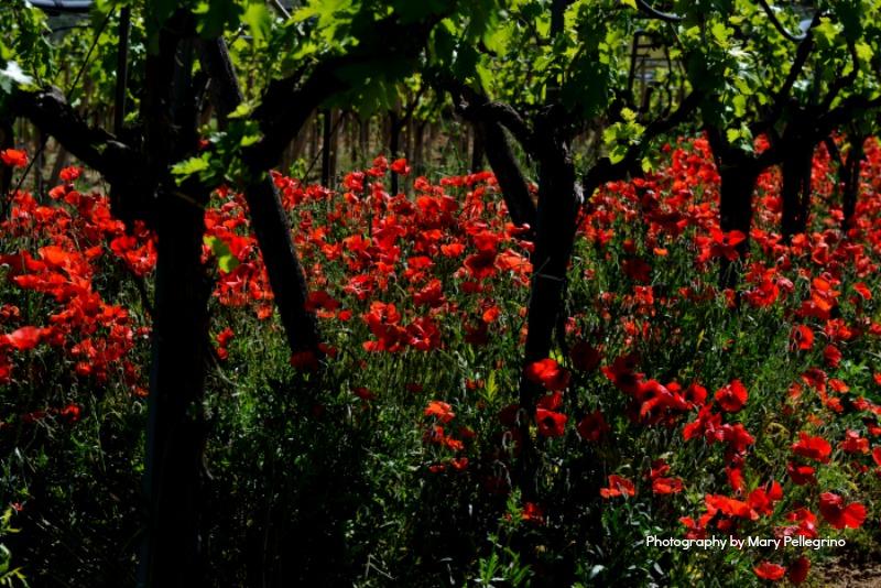 Photography by mary pellegrino57